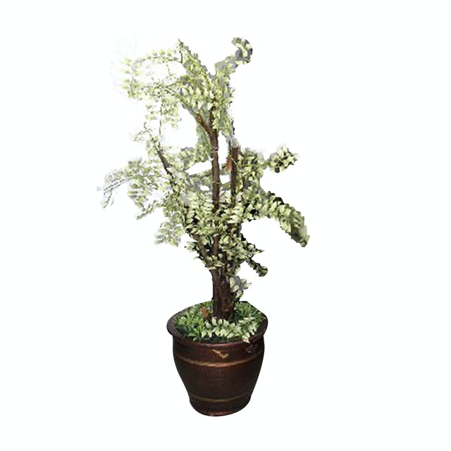 California Home Small Tree (Size 1 M) - Tree36