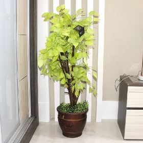 California Home Small Tree (Size 1 M) - Tree63
