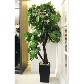 California Home High Tree (Size 2 M) - Tree318