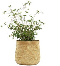 Alur Bamboo Bask Planter