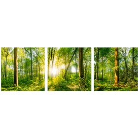 Jbrothers Poster Canvas WD 53 Green Forest with Bright Sun 3x40x40 cm