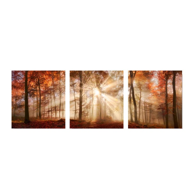 Jbrothers Poster Kanvas WD 54 Canvas Set Red Forest with Bright Sun 3x50x53