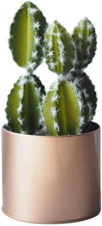 Flower Corner Cactus in Rose Gold Can A