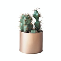 Flower Corner Cactus in Rose Gold Can B