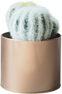 Flower Corner Cactus in Rose Gold Can D