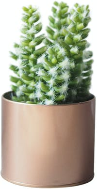 Flower Corner Cactus in Rose Gold Can E