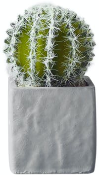 Flower Corner Cactus in Cement Pot E