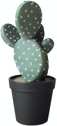 Flower Corner Cactus in Black Pot A