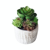 Flower Corner Mixed Cactus in Cement Pot A