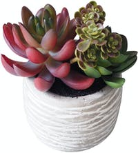 Flower Corner Mixed Cactus in Cement Pot B