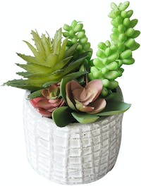 Flower Corner Mixed Cactus in Cement Pot C