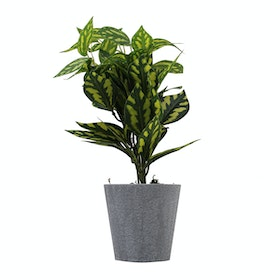 Festiva Furniture Artificial Plant Aglonema With Vase 0339 6