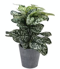 Festiva Furniture Artificial Plant Aglonema With Vase 0339 7 Yw5