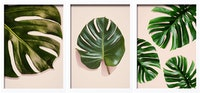 iwallyou Wall Poster Set Monstera On Pink