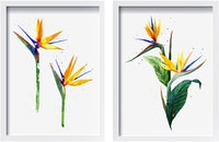 Codeco Wall Poster Set Heliconia