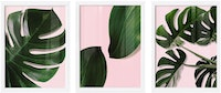 Codeco Wall Poster Set Monstera Leaves On Pink Background
