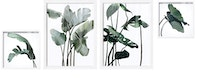 iwallyou Poster Set Tropical Plants