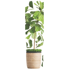 Codeco Wall Sticker Ficus Lyrata On Knit Pot
