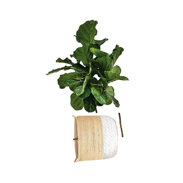 iwallyou Wall Sticker Ficus Lyrata On Knit Pot #2