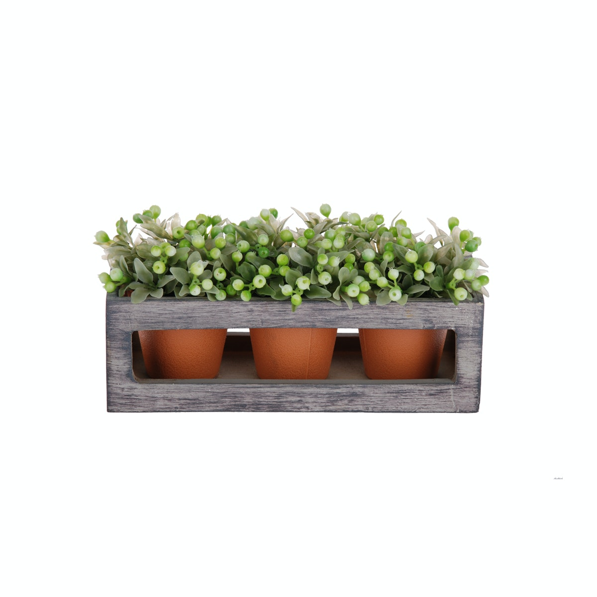 Kokoji Florist Wild Fruit Bonsai Green