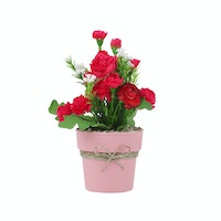 Kokoji Florist Carnation Red