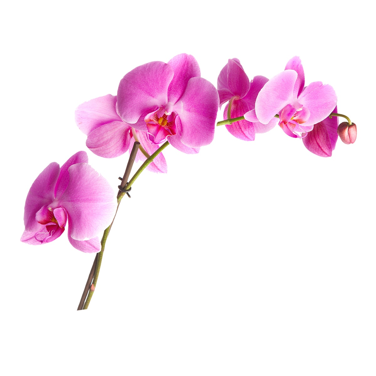 Painterous Wall Decal Magnifique Orchid 1901 120X120