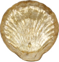 Nestudio Emmet Shell Decorative Plate
