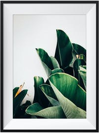Poster House Poster Heliconia + Frame Kayu 30x40cm Dengan Matboard