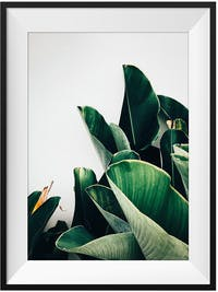 Poster House Poster Heliconia 30x45cm + Premium Frame Kayu 40x55cm Dengan Matboard