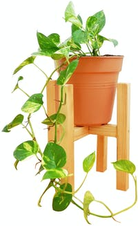Stiletto Living Standing Planter Small Natural (Pot bunga/Tempat bunga/Hiasan rumah)