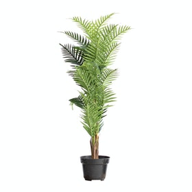 Kana Furniture Artificial Plant 2392 Kwai A3