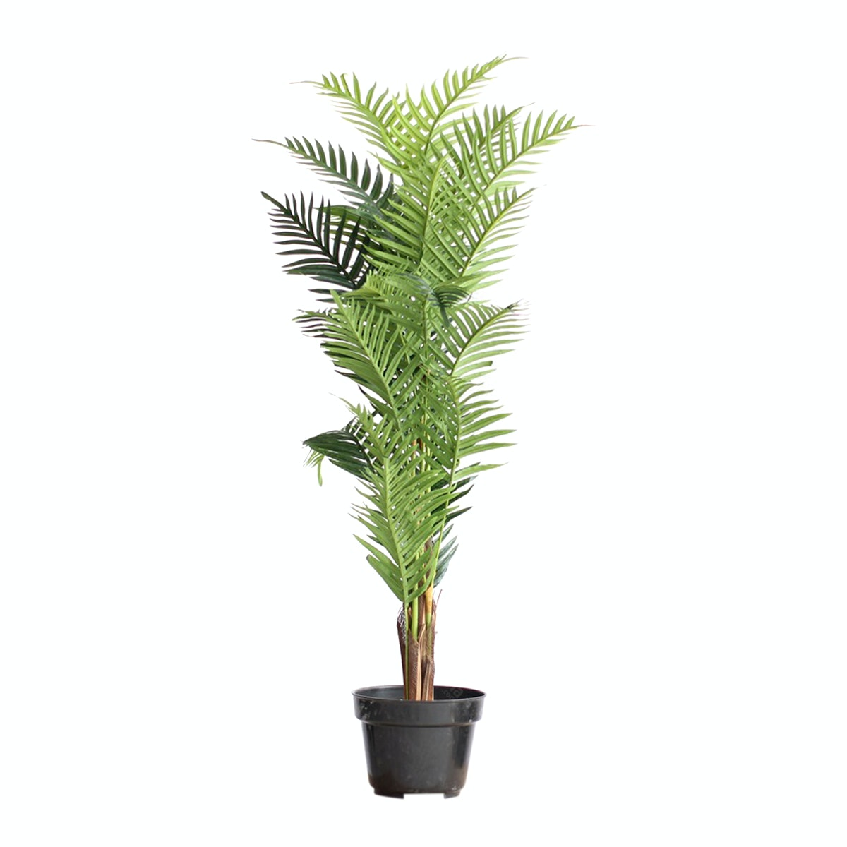Thema Home Artificial Plant 2392 Kwai A3