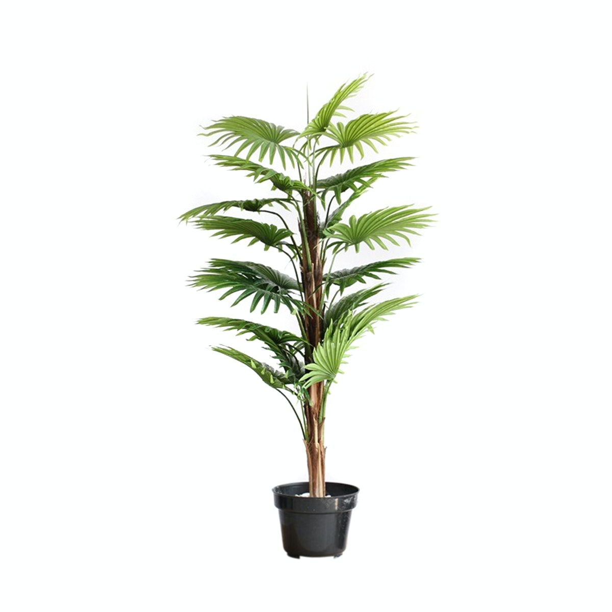 Thema Home Artificial Plant 2397 Fan Kwai A3