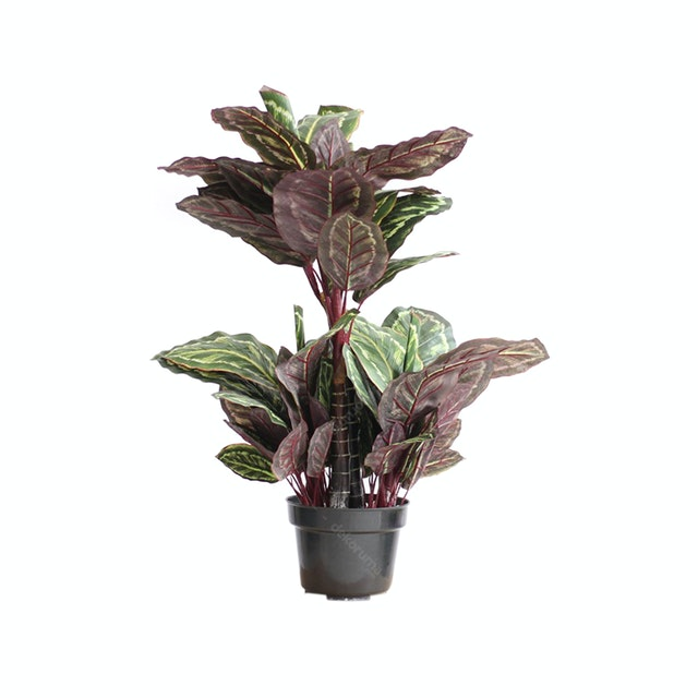 Thema Home Artificial Plant 2402 Peacock Leaf A3 2402