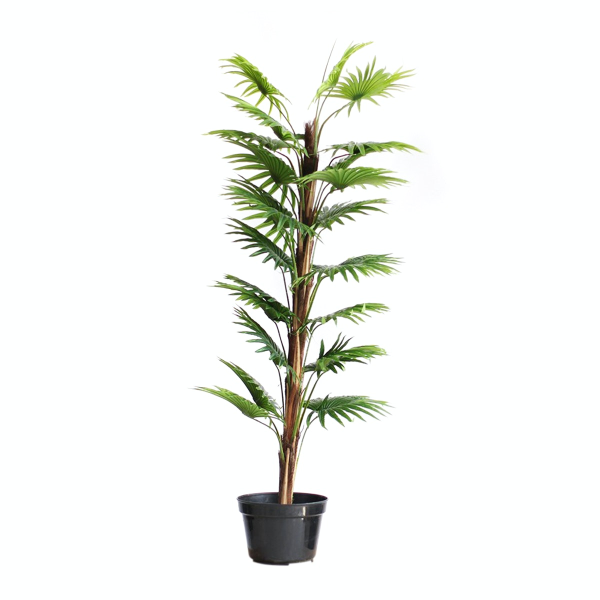 Thema Home Artificial Plant 2396 Fan Kwai A3