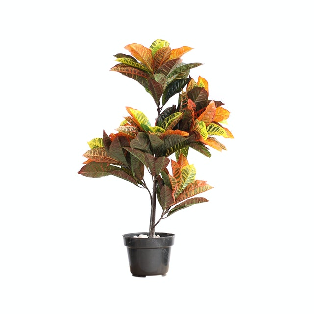 Kana Furniture Artificial Plant 2408 Codiaeum Variegatum A3