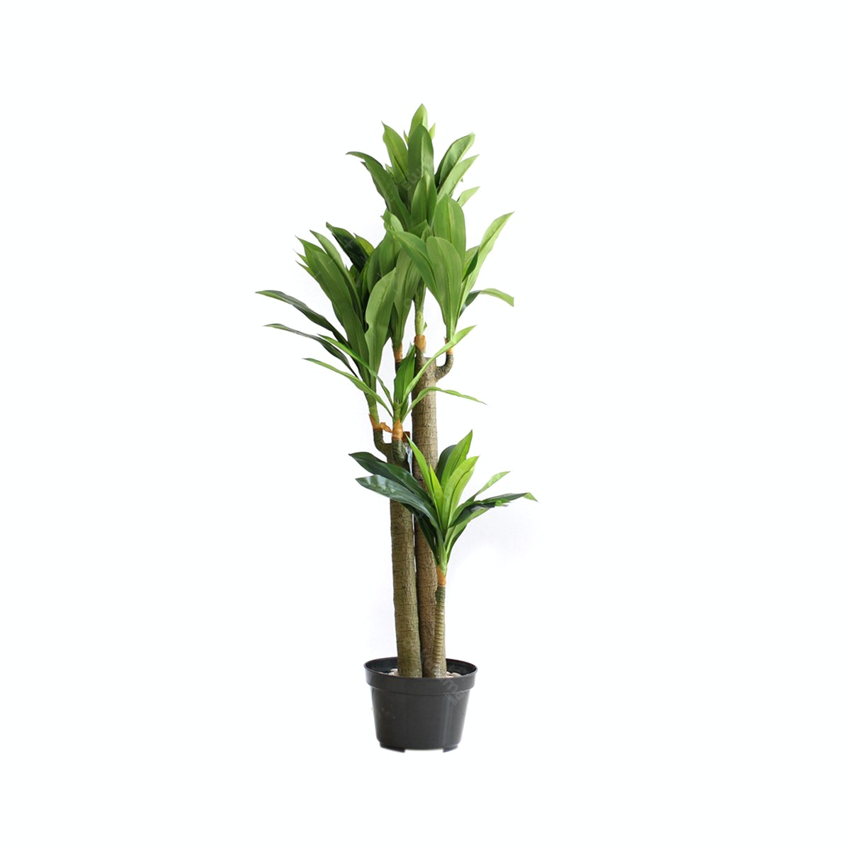 Thema Home Artificial Plant 2399 Brazil Sago Cycas A3