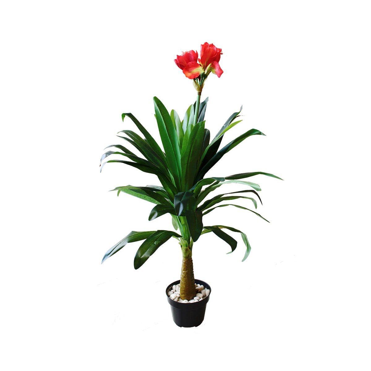 KANA FURNITURE Amaryllis Vittata A3 2395