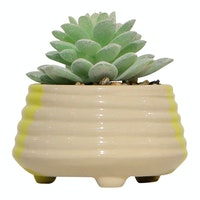 Vivere Flower Arg Cactus Echeveria Small 13
