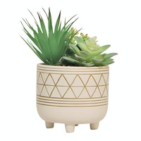 Vivere Flower Arg Cactus Mix W/Pot Whi 15x17cm
